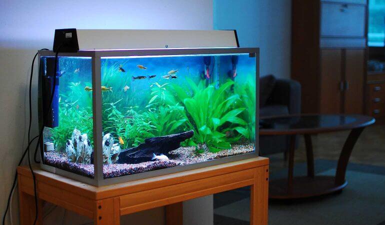 Qué se necesita para limpiar el acuario