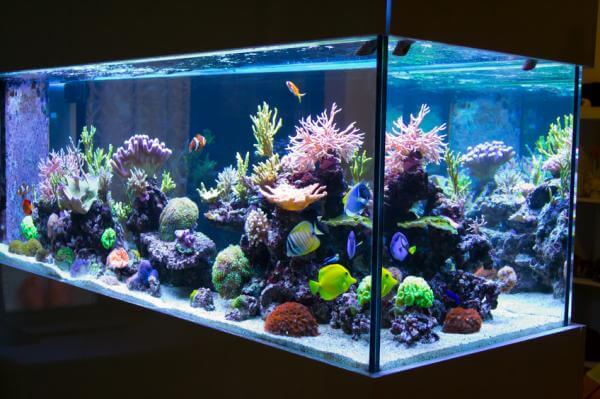 Recomendaciones para limpiar el acuario