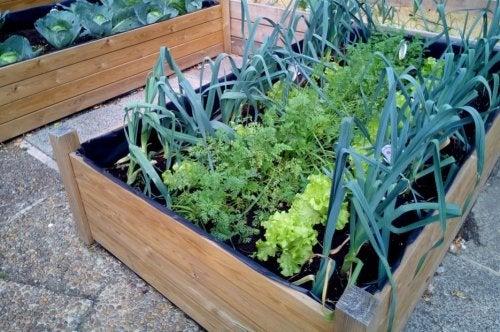 Un huerto en jardineras