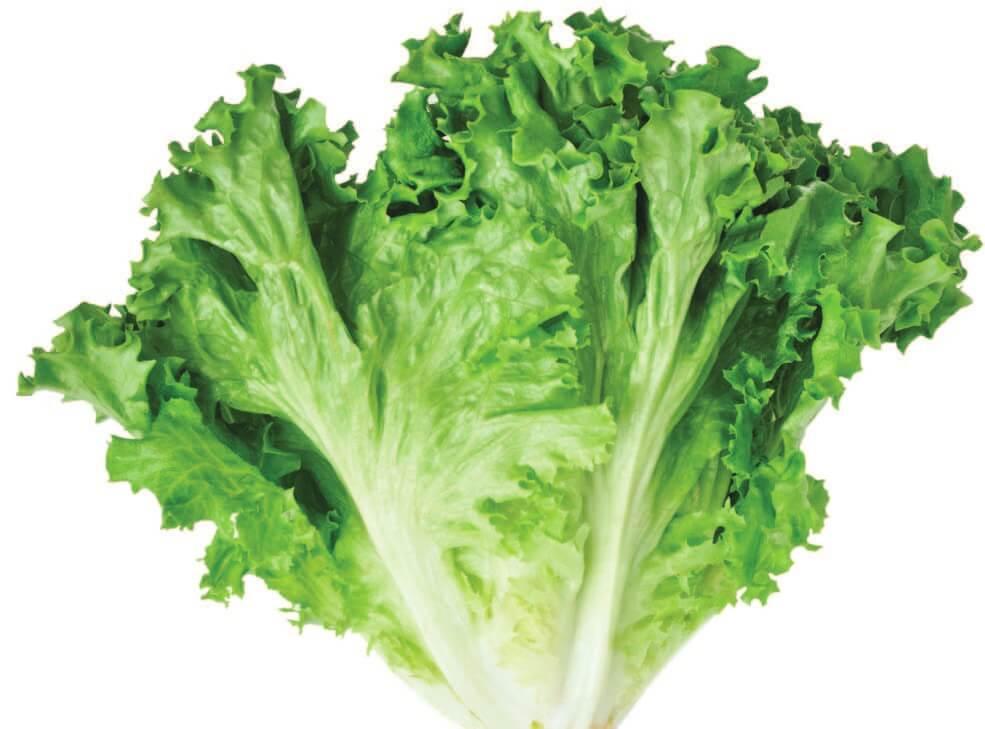 Verduras para plantar en casa