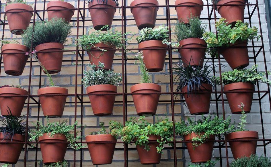 Macetas con plantas colgadas en la pared en huertos caseros.