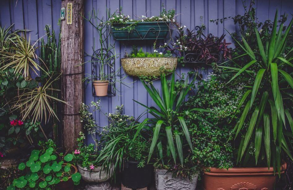 Pared frondosa con plantas en jardineras y macetas.