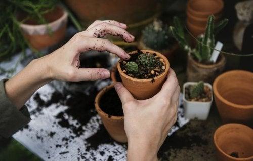 La falta de espacio no es excusa para no plantar huertos caseros.