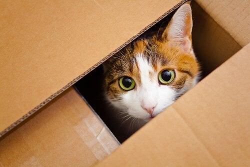 tienda para gatos