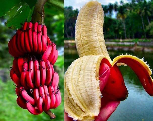 Batido de plátano rojo.