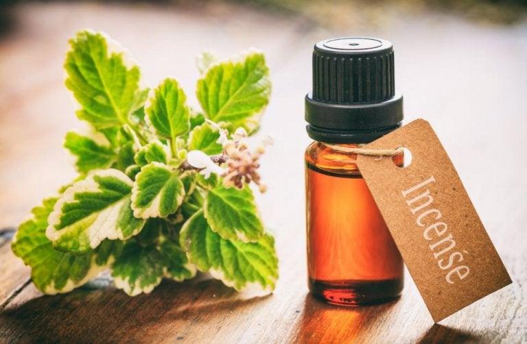 8 usos del aceite esencial de incienso que te gustará saber