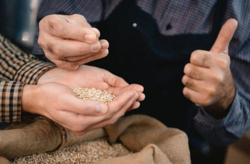 Coger granos de cebada con las manos.