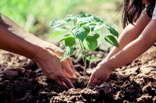 ¿Qué debes saber antes de sembrar un árbol en casa?
