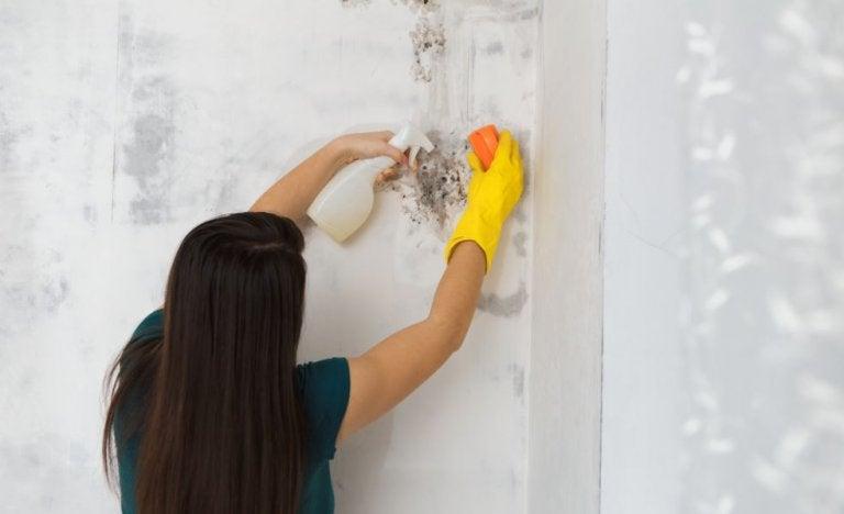 Cómo eliminar el moho de la casa