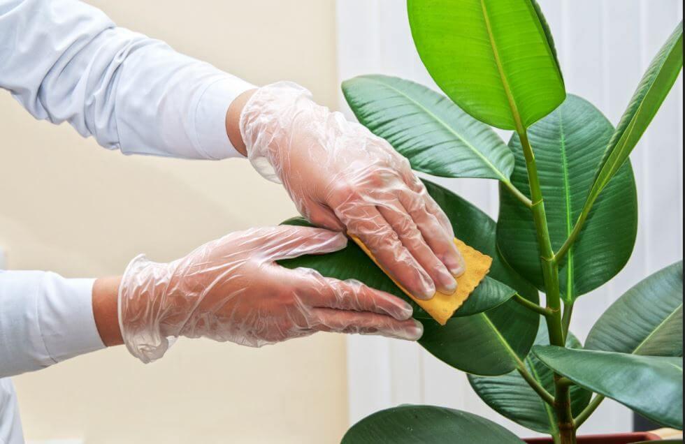 ¿Cómo limpiar las hojas de las plantas en casa?