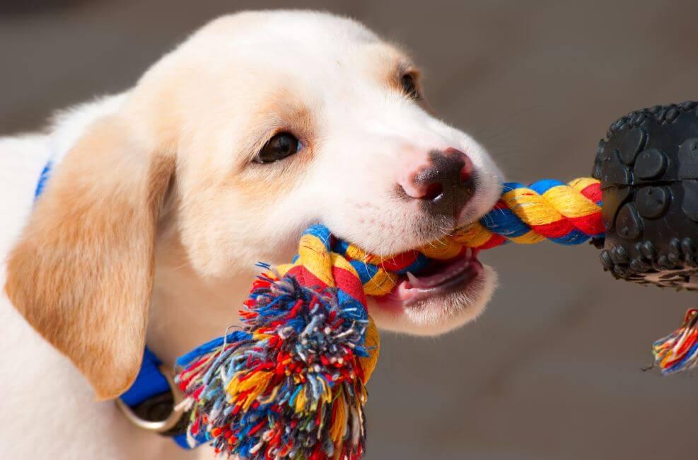 Aprende a hacer accesorios para tus mascotas