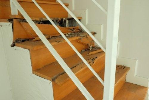 ¿Cómo eliminar el comején de la casa de manera eficaz?