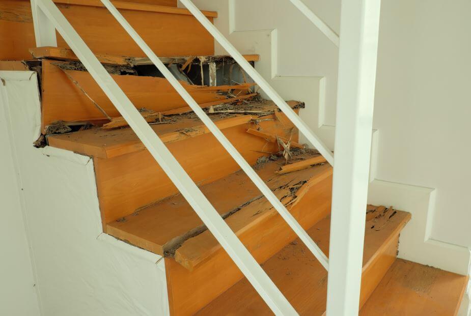 Descubre cómo eliminar el comején de la casa de manera eficaz