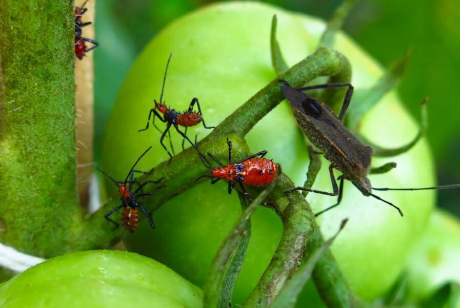5 venenos para exterminar las plagas
