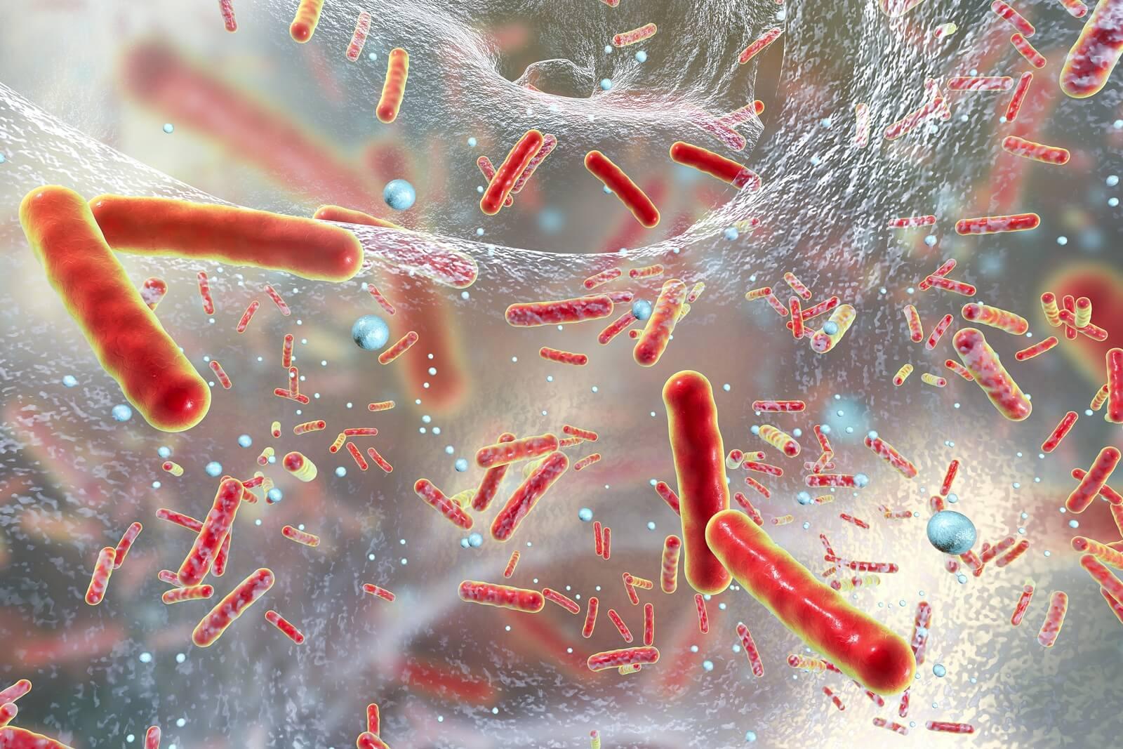 bacteria salmonella y otros bacilos