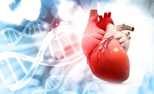 ¿Cómo es la vida de un paciente con fallo cardíaco? Recomendaciones