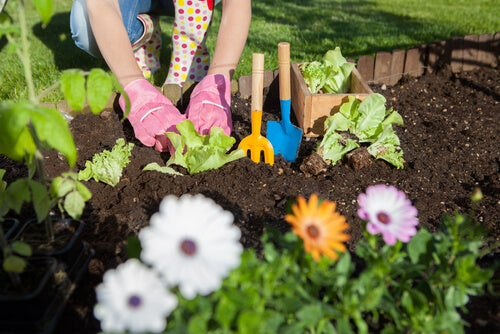 7 formas de utilizar vinagre en el jardín