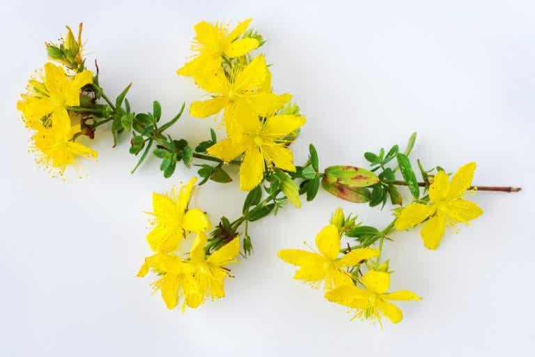 Los 6 beneficios de la hierba de San Juan
