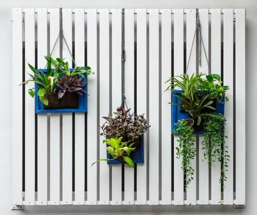 Es posible realizar un jardín vertical de manera sencilla.