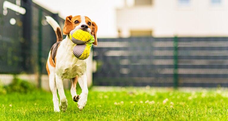 Aprende a realizar accesorios para tus mascotas