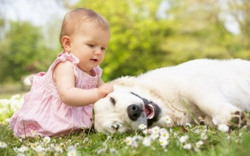 Bebé jugando con un perro en la hierba