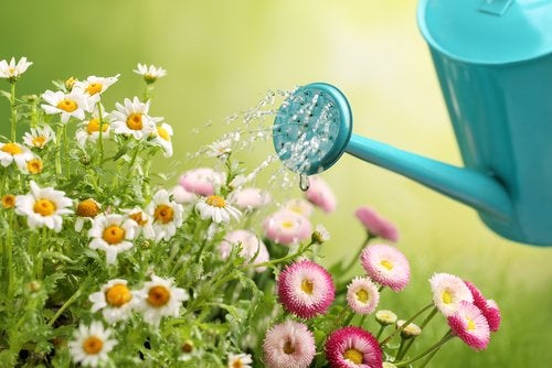 Haz tus propias regaderas para el jardín de manera sencilla y económica