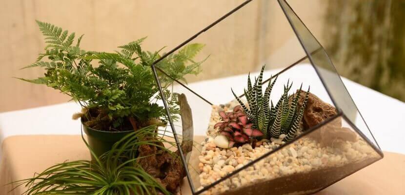 Realizar un terrario de cristal es sencillo y económico.