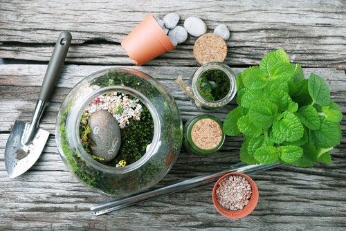 Los terrarios son los mejores regalos para los amantes de las plantas