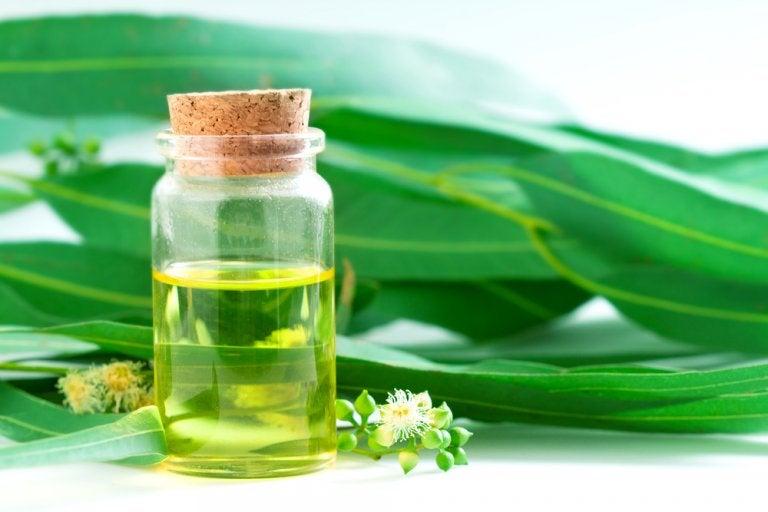 5 Remedios Naturales Con Eucalipto Que Debes Saber Mejor Con Salud