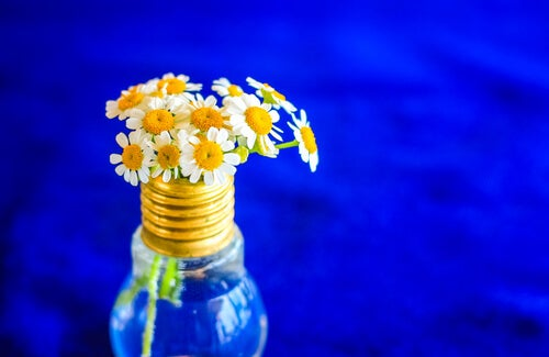 Puedes realizar floreros a partir de bombillas viejas.