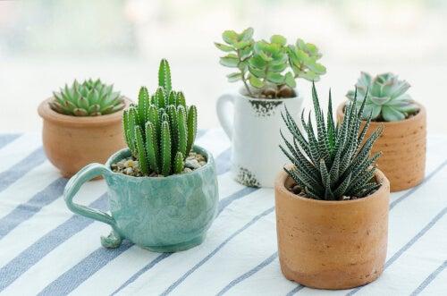 Tazas con cactus para reutilizar los utensilios viejos de la cocina