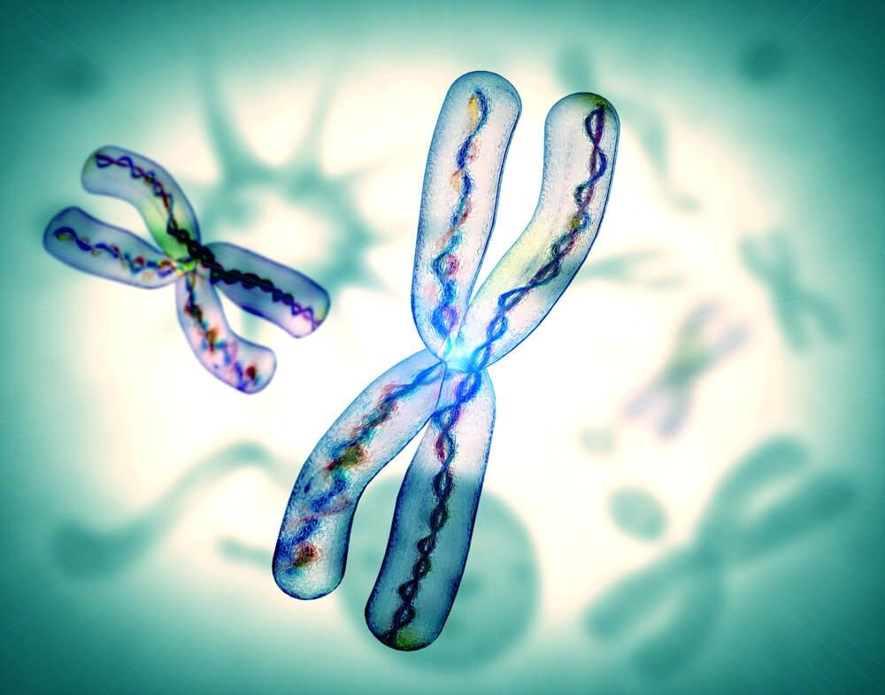 cromosomas del adn