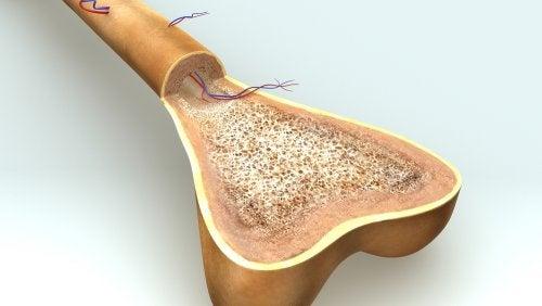 Osteogénesis: ¿cómo se produce el crecimiento de los huesos?