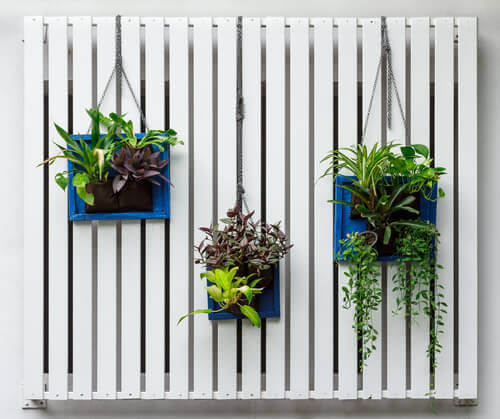4 ideas para transformar una pared en un jardín vertical