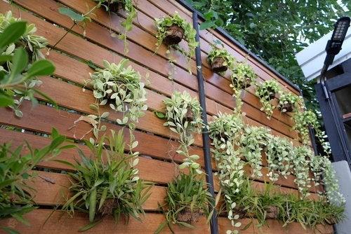 Jardín vertical: 4 formas de tener uno en casa