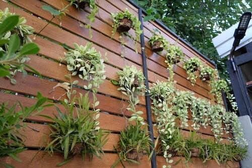Jardin Verticale 4 ideas para transformar una pared en un jardín vertical – mejor con