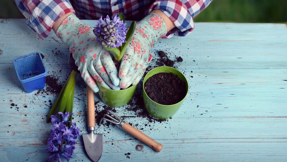 Consejos para cuidar el jardín de tu casa.