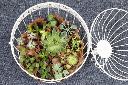 Ideas originales para decorar con suculentas