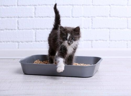 Formas de usar talco de bebé en tu hogar: para desodorizar la arena para gatos