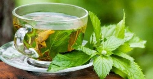 3 infusiones para el colon y los intestinos