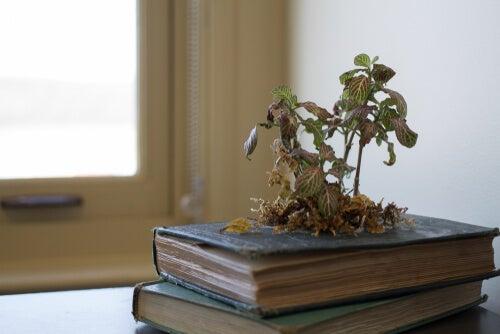 Se pueden realizar plantas en libros.