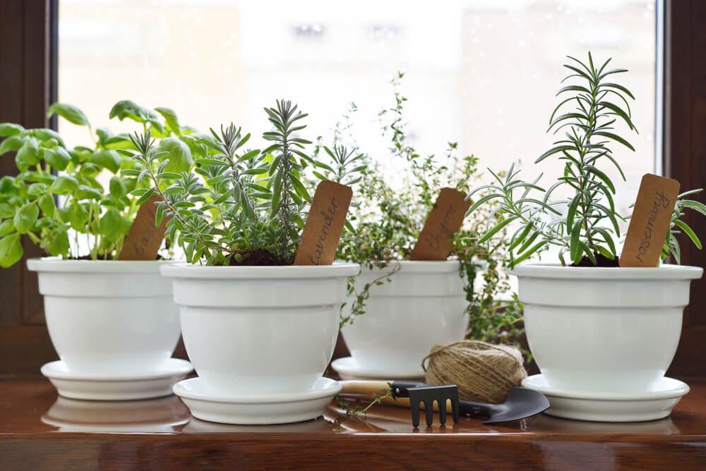 Plantas aromáticas para la casa.