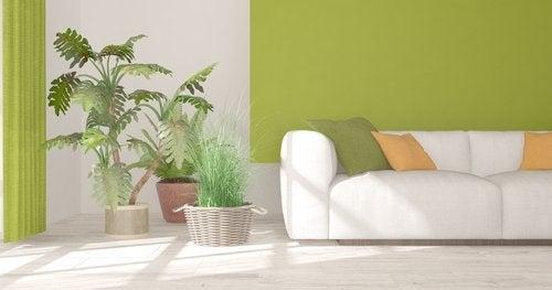 9 plantas de interior que debes conocer para decorar tus espacios