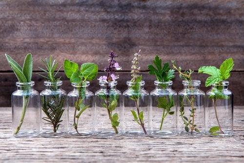 6 tipos de envases que puedes reciclar para hacer macetas