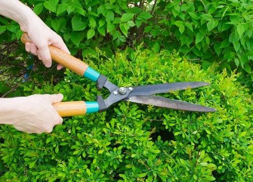¿Qué debes tener en cuenta antes de podar tu jardín?