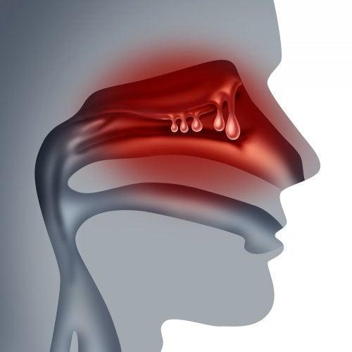 Recreación de la mucosa nasal