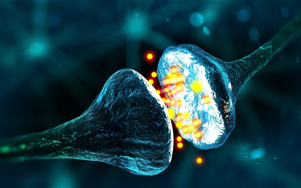 axones de las neuronas