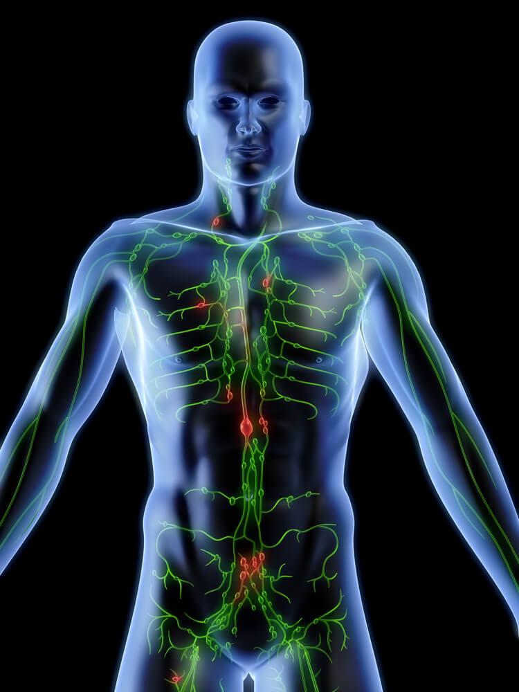 Sistema linfático: 4 datos interesantes que te gustará conocer