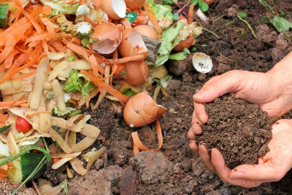 5 maneras de hacer abono orgánico para tus plantas