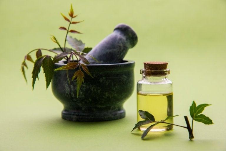 5 formas de usar aceite de nim como remedio casero